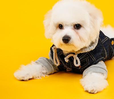 Bester Hundepullover Vergleich