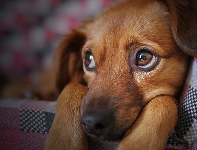 Bester Zeckenschutz für Hunde Vergleich