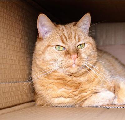 Katzenhöhle Testsieger