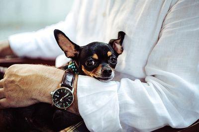 Beste Hunde OP Versicherung Testbericht