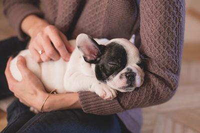 Beste Hunde OP Versicherung kaufen