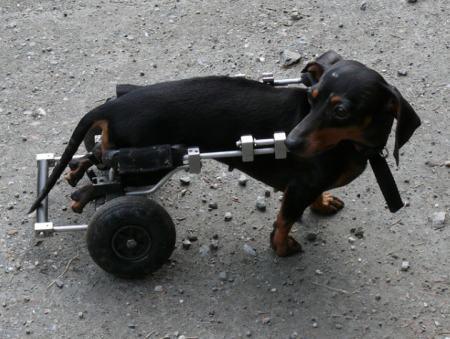 Hund Unfallversicherung