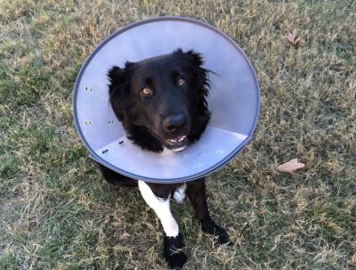 Hund Verletzung