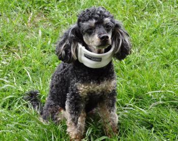 Hundekrankenversicherung Abdeckung