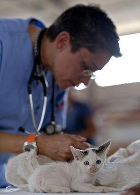 Katzenversicherung Kaufempfehlung