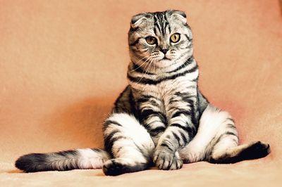 Katzenversicherung Test