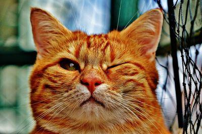 Katzenversicherung Testbericht