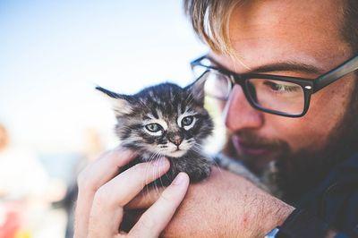Katzenversicherung Testsieger