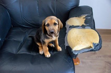 Tierversicherung Vergleich Haftpflicht
