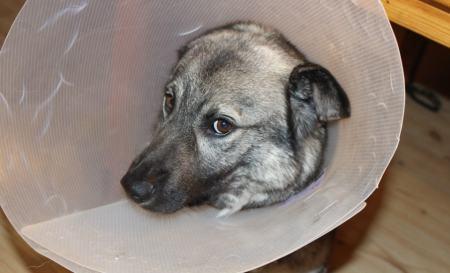 beste Hundekrankenversicherung Vergleich