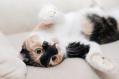 Beruhigungsmittel für Katzen