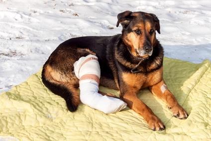 Beste Hunde OP Versicherung Test