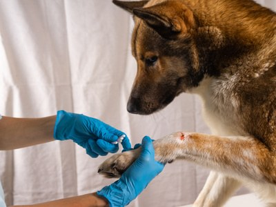Beste Hunde OP Versicherung