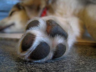 Bestes Beruhigungsmittel für Hunde kaufen Knaller schneiden