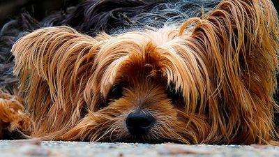 Bestes Beruhigungsmittel für Hunde kaufen