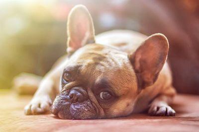 Bestes Beruhigungsmittel für Hunde