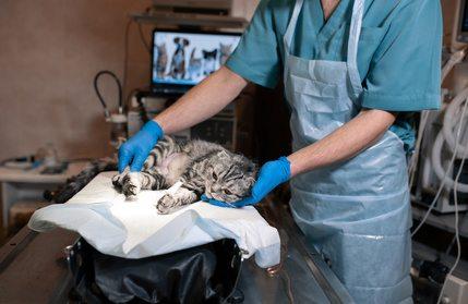 Vergleich Katzenversicherung Operationen