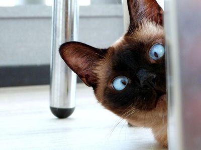 Adventskalender für Katzen schenken