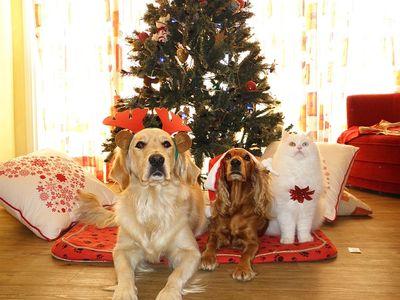 Adventskalender für Hundebesitzer und Hunde