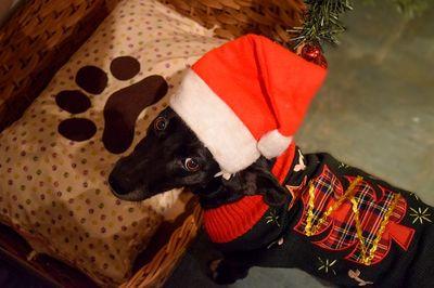 Bester Adventskalender für Hunde