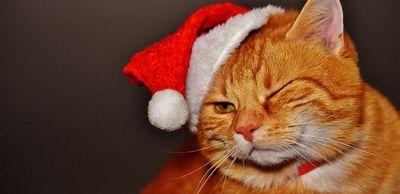 Bester Adventskalender für Katzen