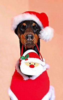 Die besten Geschenke für Hunde
