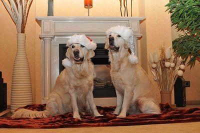 Die besten Geschenke für Hundebesitzer