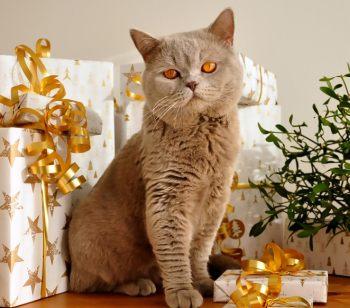 Geschenke für Katzen