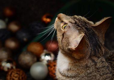 Geschenke für Katzenbesitzer