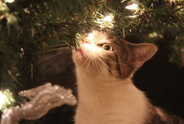 Geschenke katzen