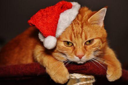 Geschenke katzenbesitzer